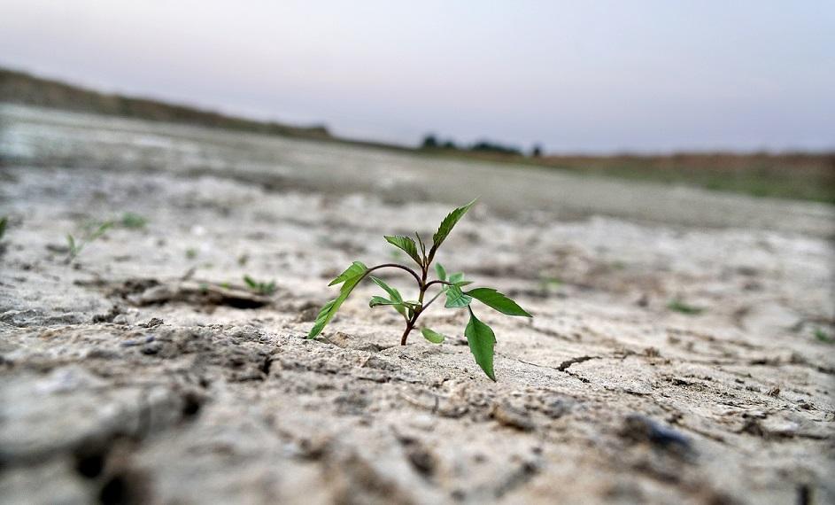 foto van droge akker met een bloeiende plant