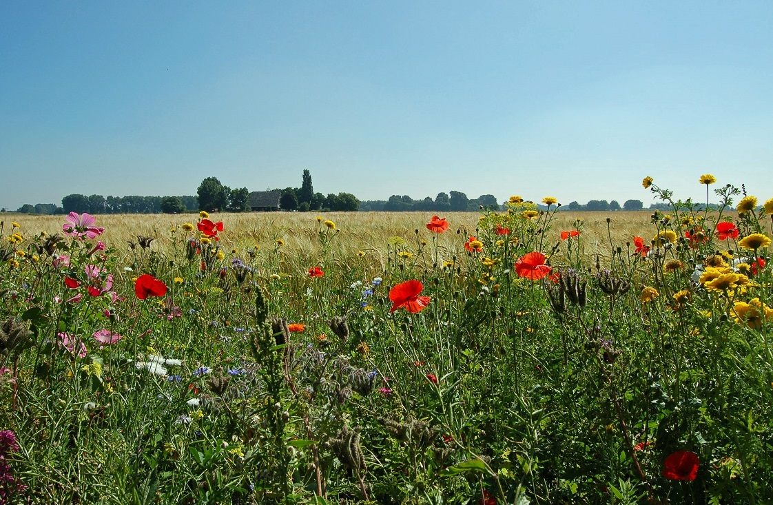 bloemrijke akkerland
