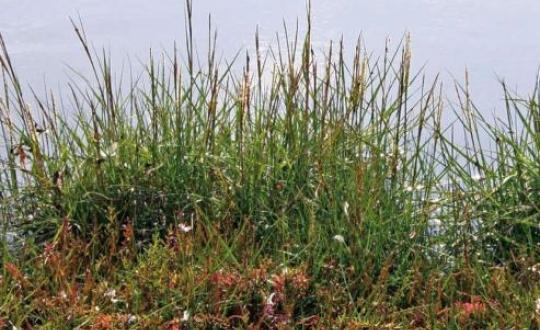 Foto grassen