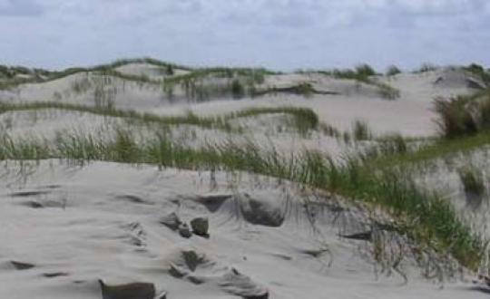 foto duinen
