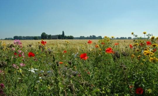 foto: 'bloemrijke akkerranden bevorderen de biodiversiteit', fotograaf: Lilian Pruissen