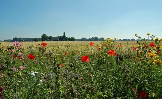 foto van bloemrijke akkerrand