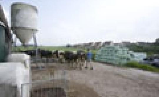 De aanhouder wint - Boeren in Friesland, Tjalleberd