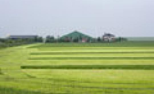 Productielandschap - Modern rundveebedrijf, Holwerd, Friesland
